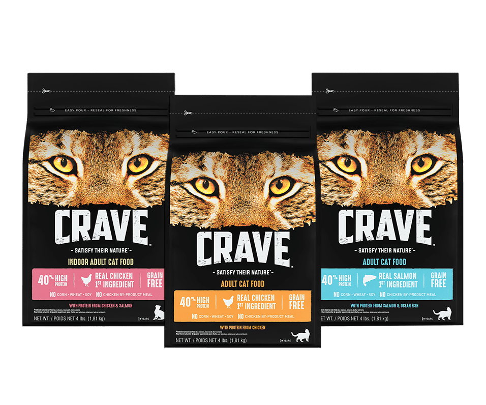 Kitten with Protein from Chicken | CRAVE™